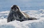 Antarktis 29. Januar - 10. Februar 2011