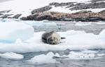 Pleneau Island, Antarctic Peninsula