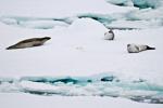 c6_amundsen-sea_21jan15_08