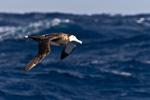 f4_southern-ocean_06feb15_161