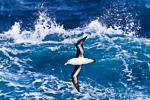 f4_southern-ocean_06feb15_202
