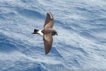 170216_seabirds_26