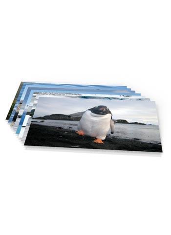 https://www.spitsbergen-svalbard.com/?page_id=5093