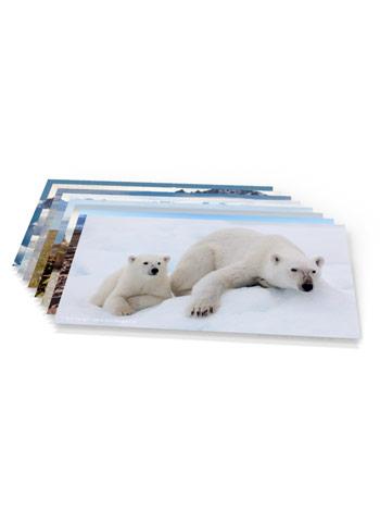 https://www.spitsbergen-svalbard.com/?page_id=9482