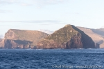 170217_campbell-island_980