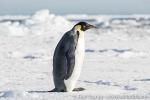 170302b_ross-sea_ice_085