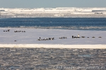 170302a_ross-sea_ice_047