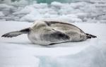 b3_Amundsen-Sea_25Jan13_11